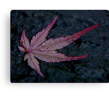 wet autumn acer leaf on slate ... Canvas Print
