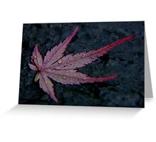 wet autumn acer leaf on slate ... Greeting Card