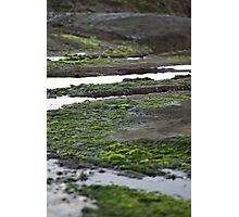 Avoca Beach rock pools Photographic Print