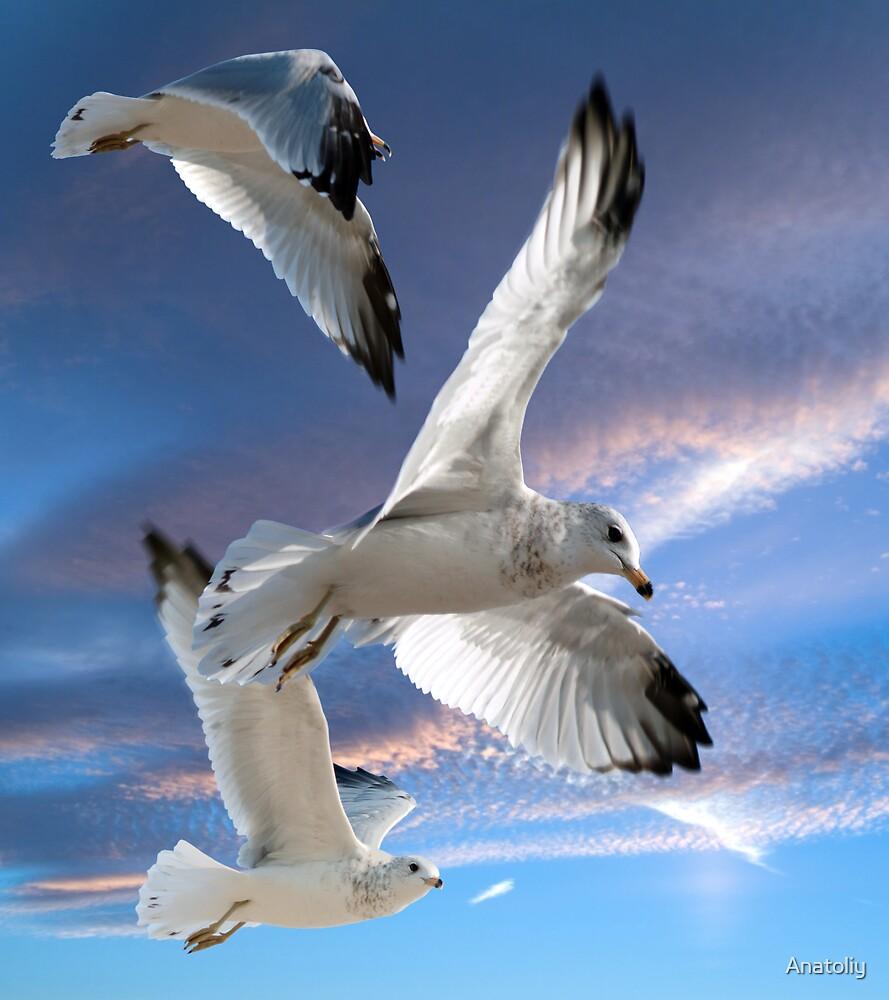 Three seagulls in flight by Anatoliy