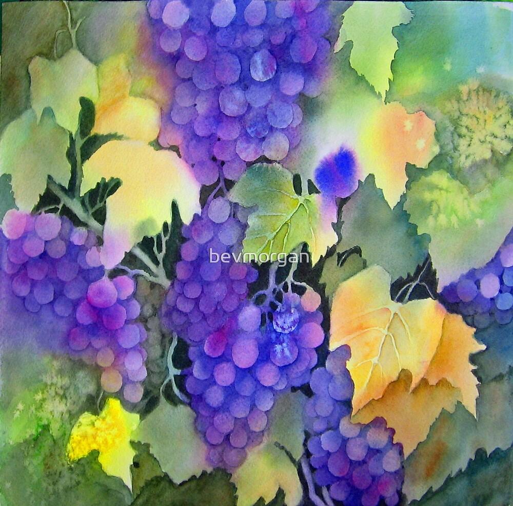 Wine on the Vine by bevmorgan