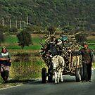 Gypsy Cart - Macedonia by john0