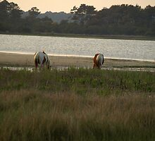 Wild Chincoteague Ponies by kimbarose