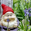 Bluebell Gnome by AnnDixon