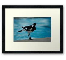 Pee Wee by the pool Framed Print