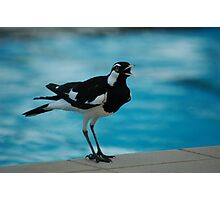 Pee Wee by the pool Photographic Print