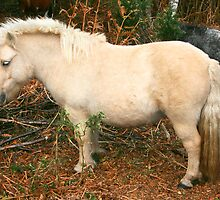 Miniature Pony by RedHillDigital