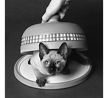 Kitty Cheese! Photographic Print