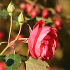 Roses and Rosehips by Pamela Jayne Smith