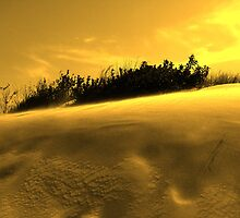 Jockey's Ridge Golden Dunes by Leslie Wood