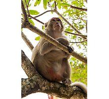 Monkey Island Photographic Print