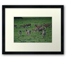 fountains abbey - Studley Royal Park 3 Framed Print