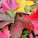 Autumn 4 by lareejc