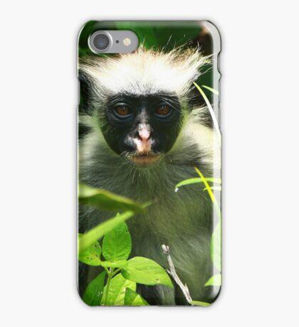 Red Monkey of Zanzibar iPhone Case/Skin
