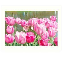 Pink tulips at the Keukenhof - Netherlands Art Print