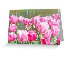 Pink tulips at the Keukenhof - Netherlands Greeting Card