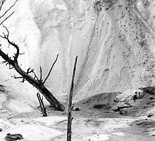 Tree in Sulfur by Jonathan Eggers