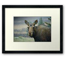Moose in a Snowstorm Framed Print