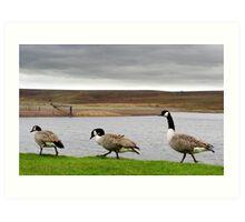 Geese! Art Print