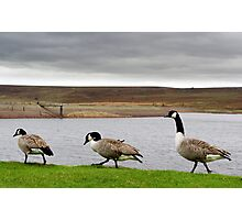 Geese! Photographic Print
