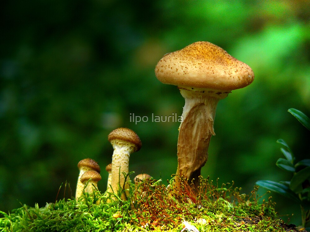 Mushrooms  by ilpo laurila