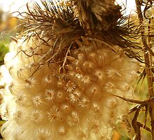 Thistle Seed by Maureen Kay