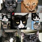 Almas Rescued Cats by Virginia N. Fred