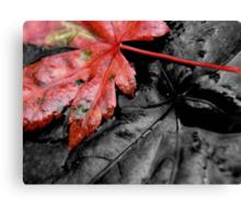 fallen autumn leaf ... Canvas Print
