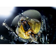 Face of a Fly Photographic Print