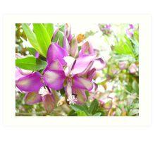 Purple Bloom Art Print