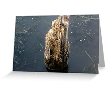 Log in water front Greeting Card