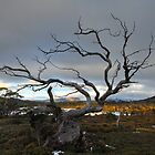 A hard life, Overland Track, Tasmania by tasadam
