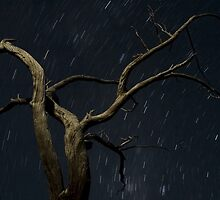 Moonlight and stars, Labyrinth, Tasmania by tasadam