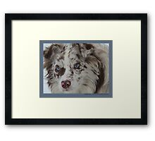 Australian Shepherd Feb Framed Print