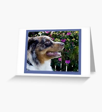 Australian Shepherd Apr Greeting Card