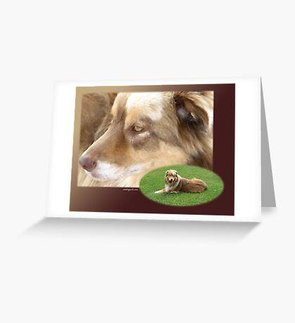 Australian Shepherd  May Greeting Card
