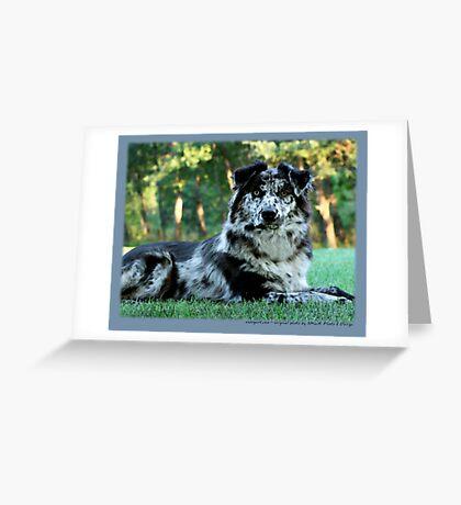 Australian Shepherd Sep Greeting Card