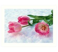 Tulips & Snow Art Print