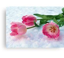 Tulips & Snow Canvas Print