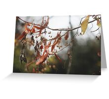 Autumn Leaves in Cambridgeshire England Greeting Card