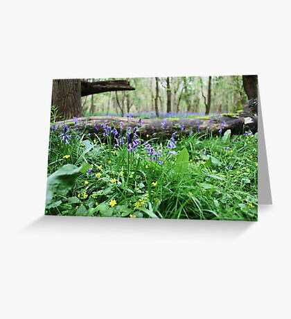 Bluebell wood in Cambridgeshire, England Greeting Card