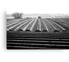 Ploughed Field 01 (Northamptonshire) Canvas Print