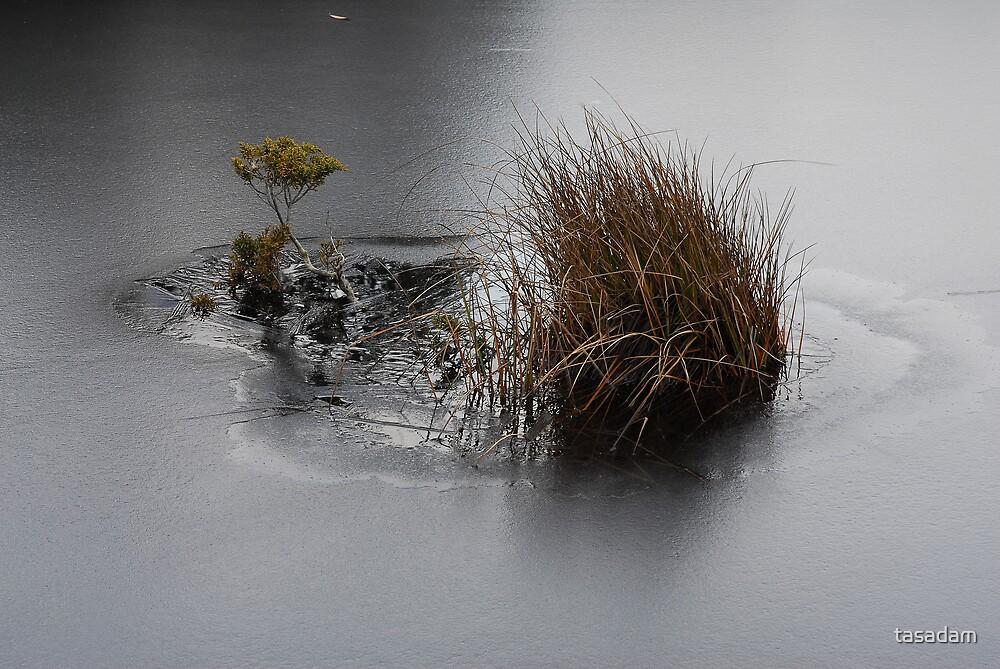 Frozen - Lake Windermere, Tasmania by tasadam