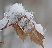 soft intricacies of newly fallen snow by Marilylle  Soveran