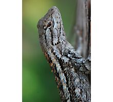Scaled Beauty Photographic Print