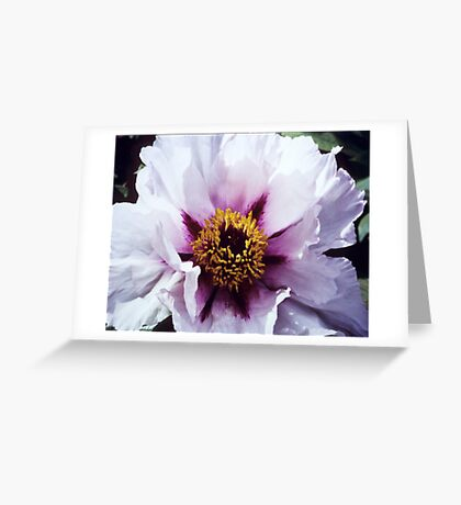 Pink Tree Peony Greeting Card