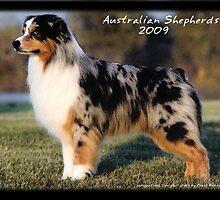 Amazing Australian Shepherds by Andrea Trotter