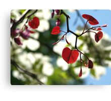 Forest Pansy Redbud Leaves, Backlit Canvas Print