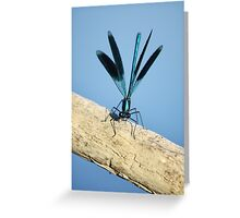 Damselfly on La Vienne river, Loire, France Greeting Card