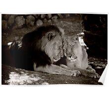 VALENTINE LIONS Poster